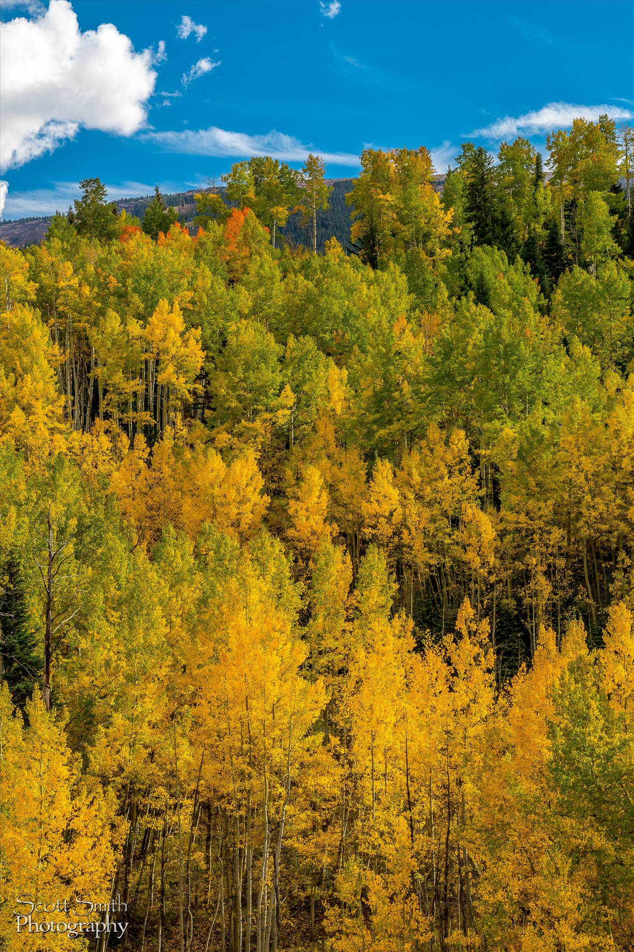 Snowmass Wilderness Area Fall Colors - Fall colors in Colorado, just outside of Snowmass Village by D Scott Smith