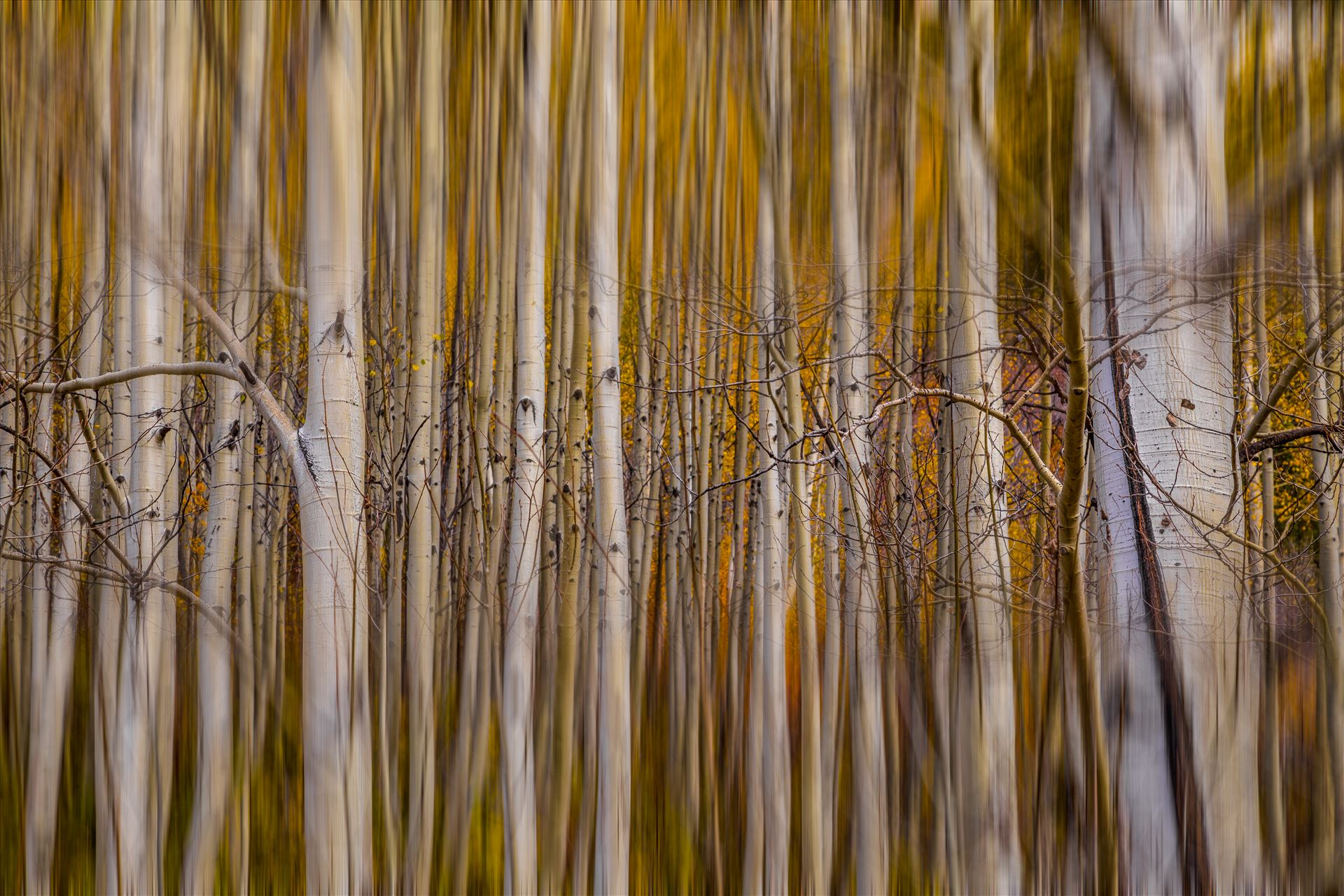 Aspen Alignment - Experimental edit of fall aspens. by D Scott Smith