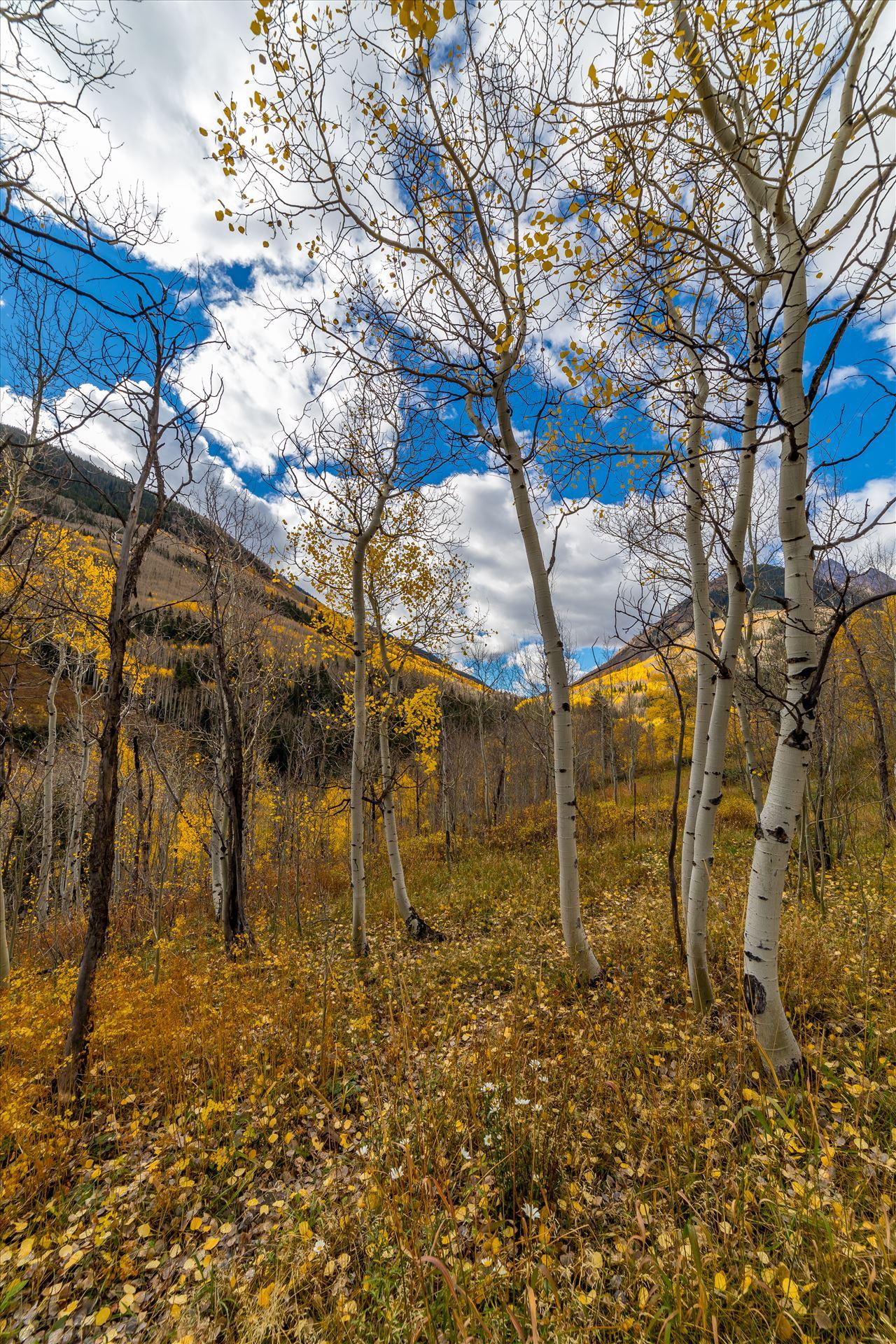 Maroon Creek Aspens - Just off Maroon Creek Drive near Aspen, Colorado by D Scott Smith