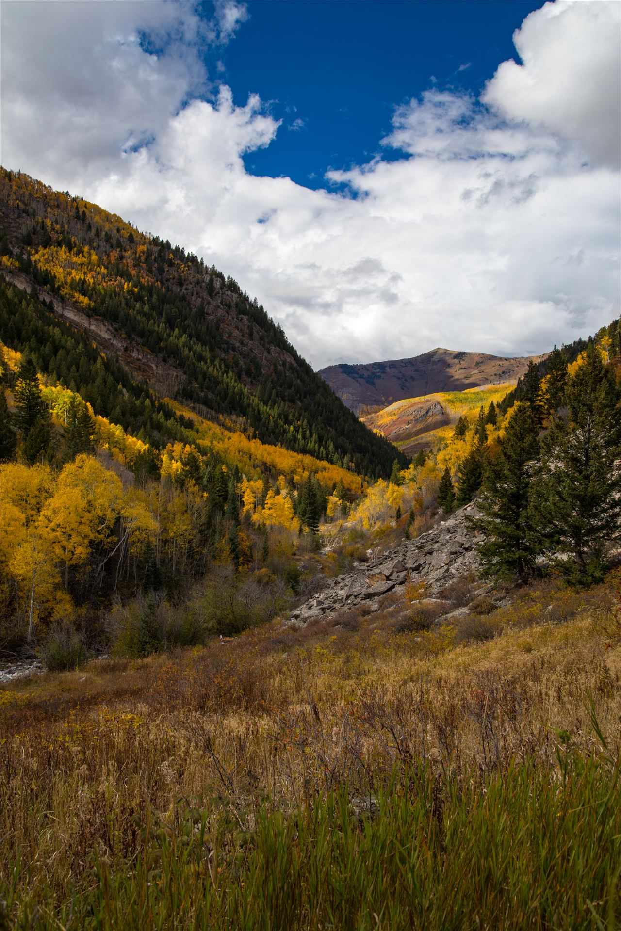 Snowmass Wilderness Area No 3 - Fall grasses and valley in the Snowmass Wilderness Area. by D Scott Smith