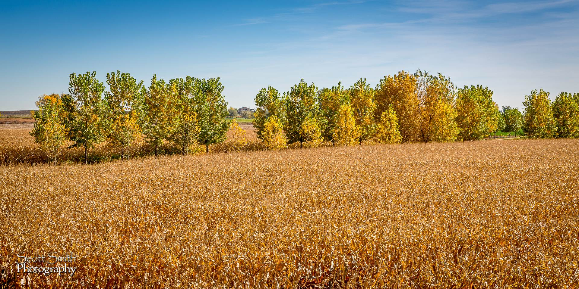 Field - Anderson Farms, Erie Colorado. by D Scott Smith
