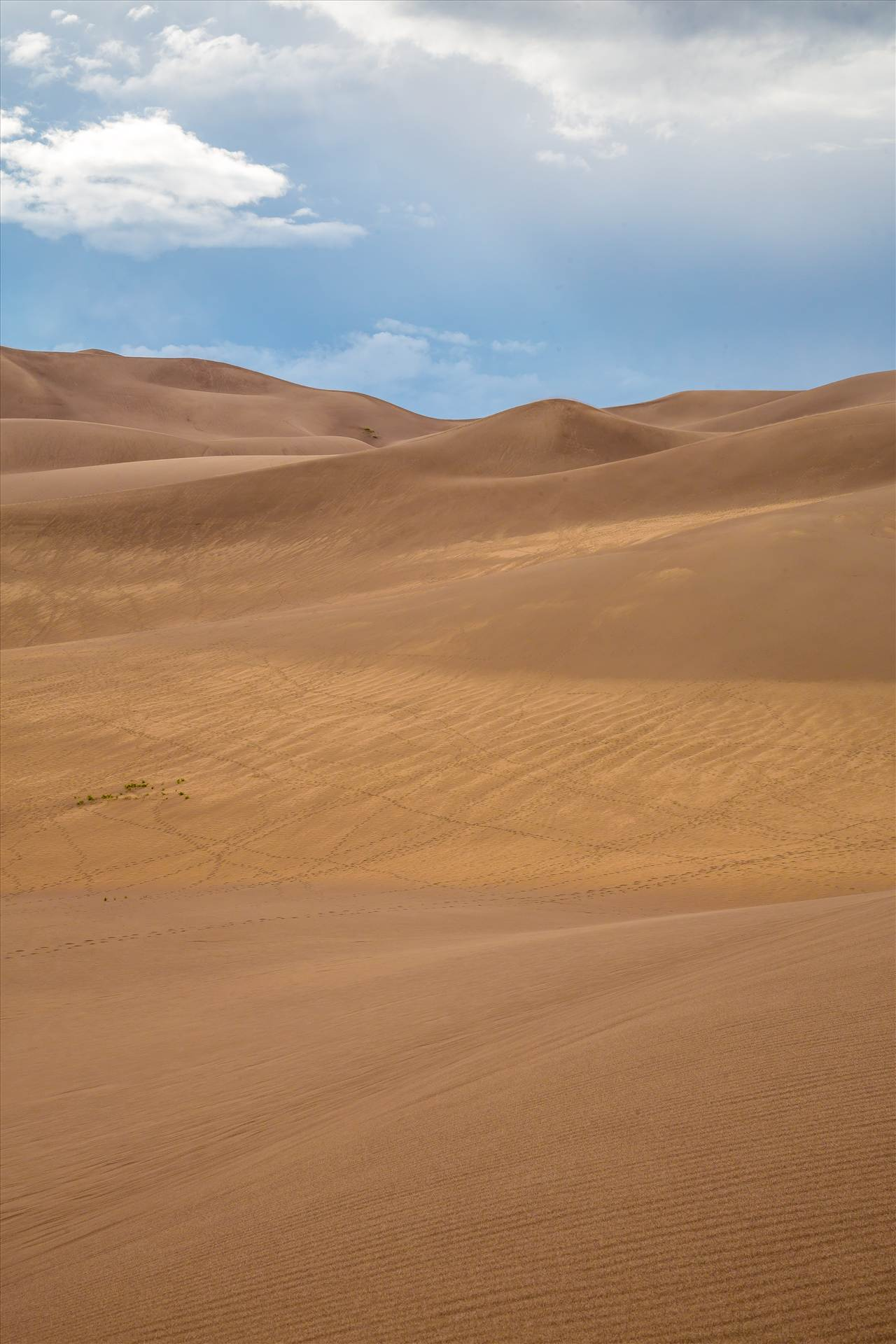Great Sand Dunes 7 -  by D Scott Smith