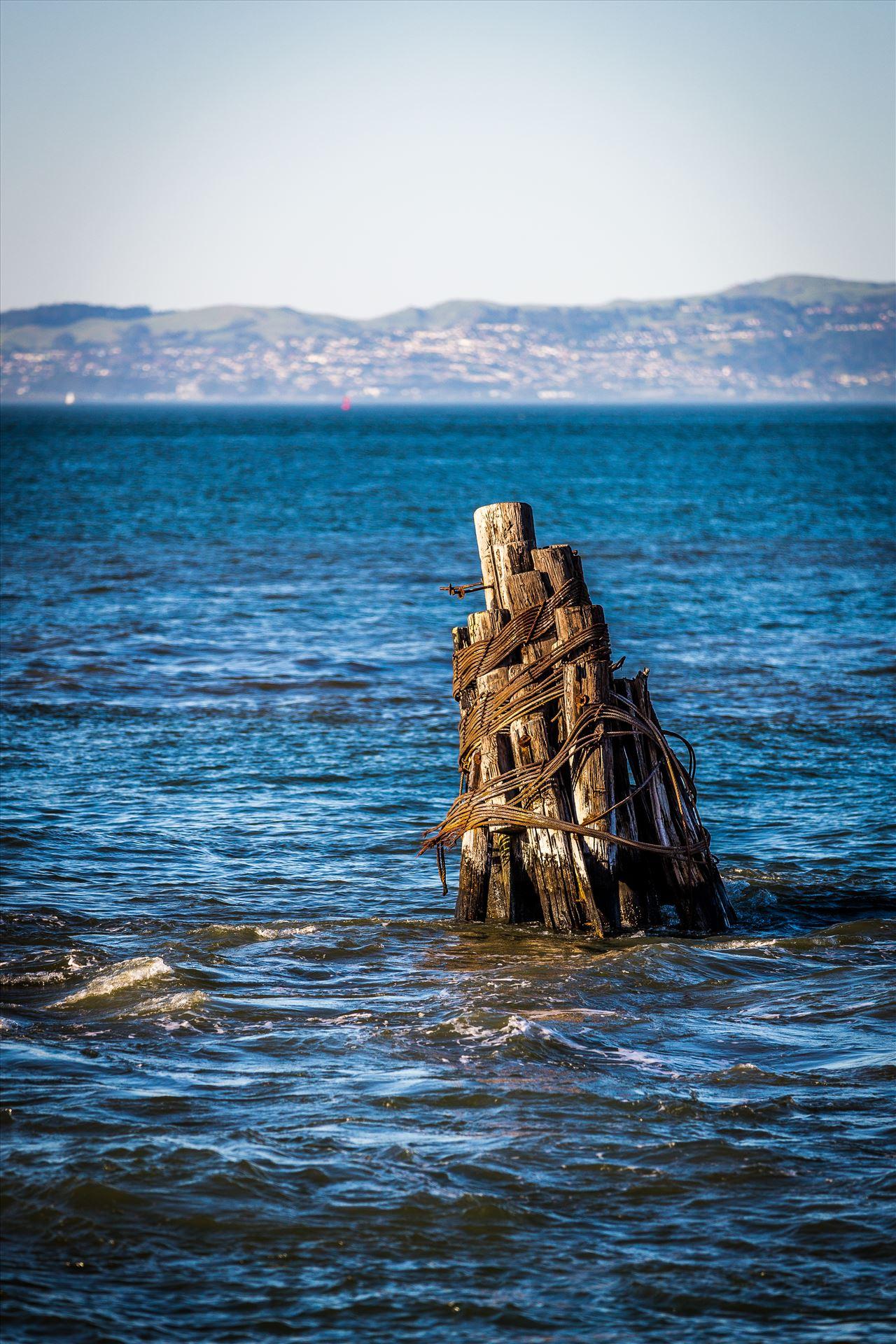 San Francisco Bay Pilings -  by D Scott Smith
