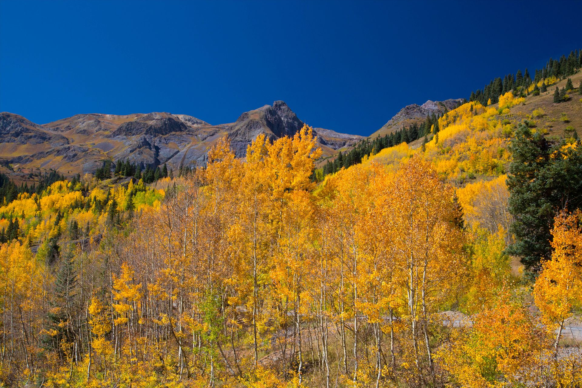 Million Dollar Highway - A quick shot of the aspens from the million dollar highway between Ourway and Silverton, Colorado. by D Scott Smith