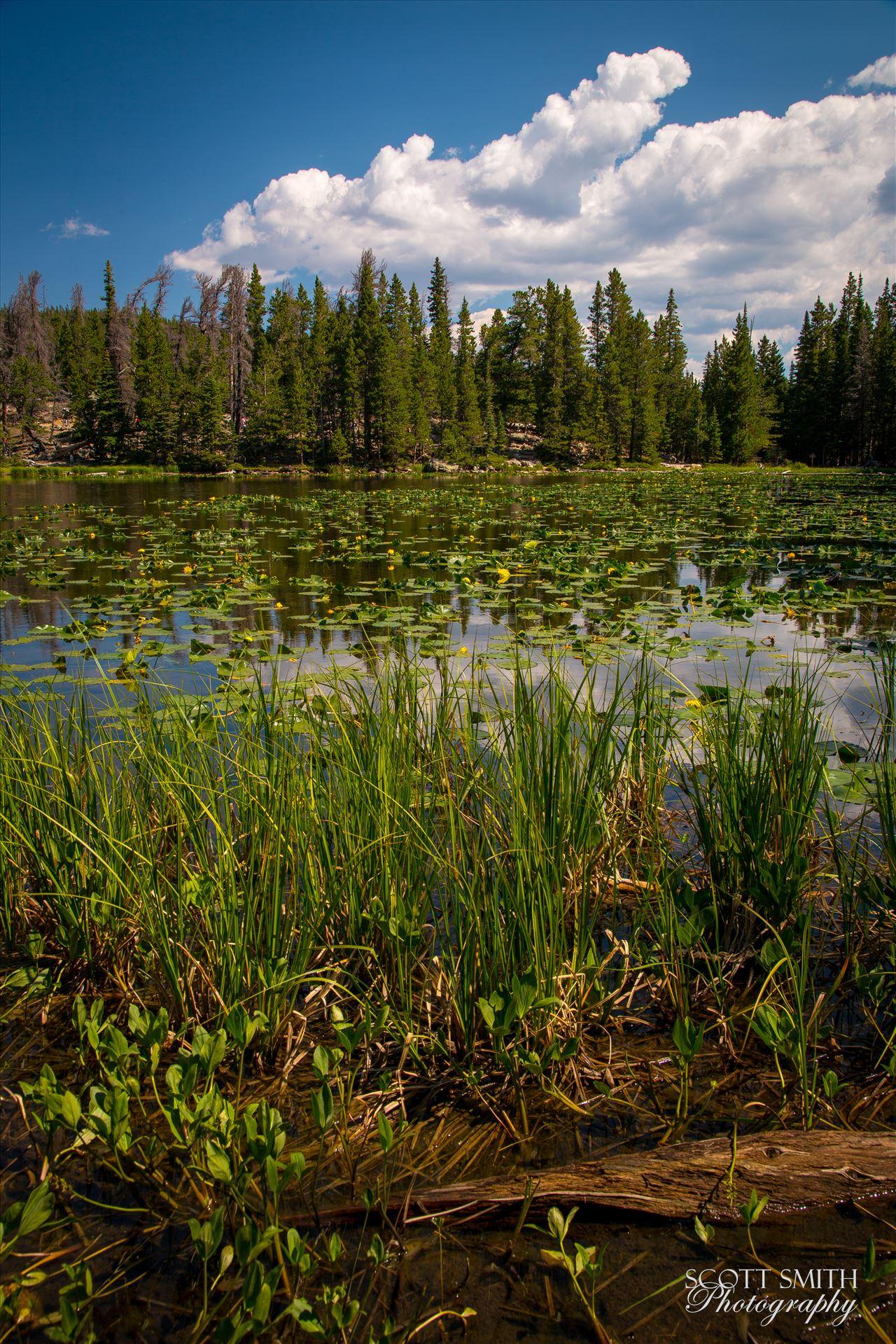 Nymph Lake -  by D Scott Smith