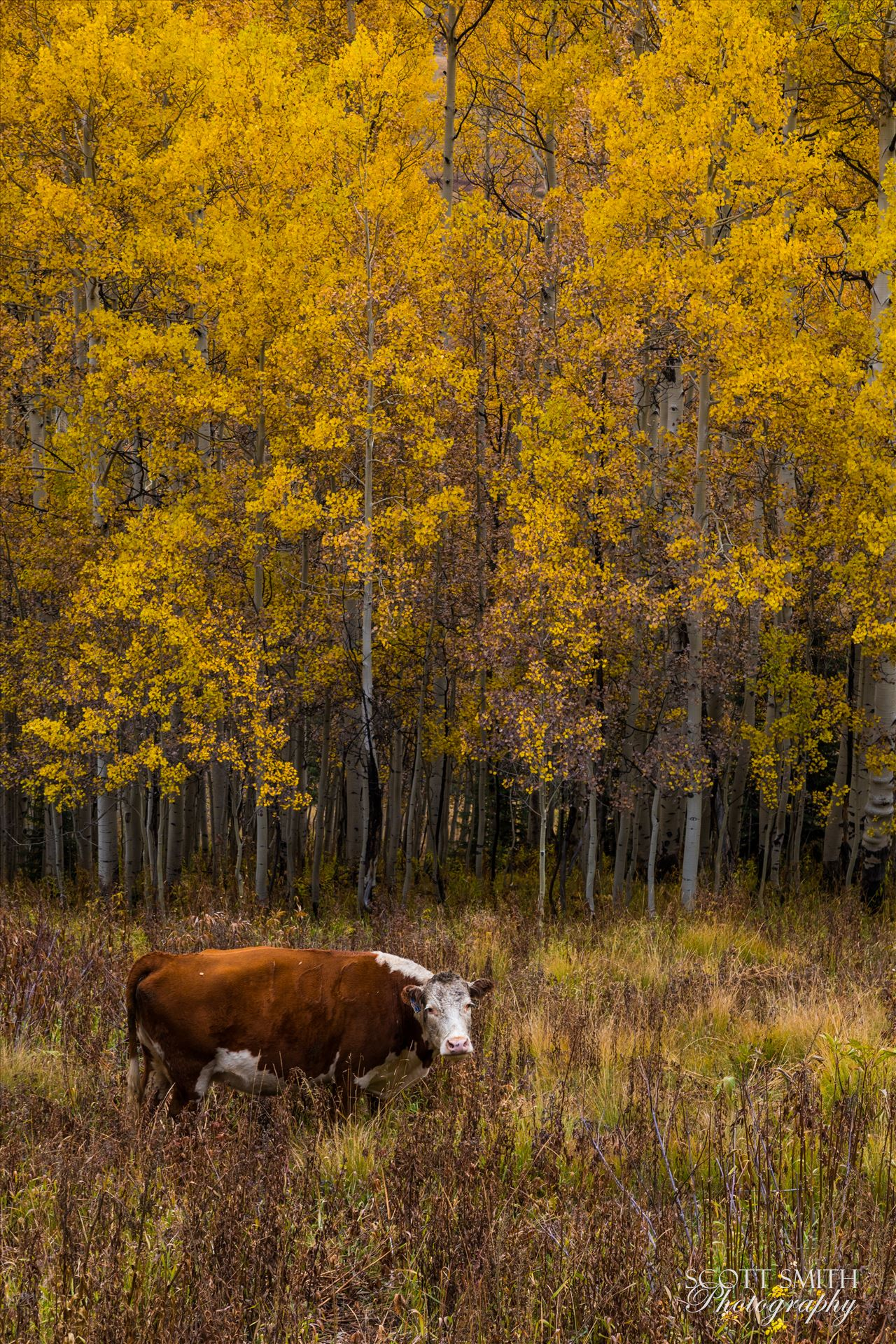 Fall Grazing -  by D Scott Smith