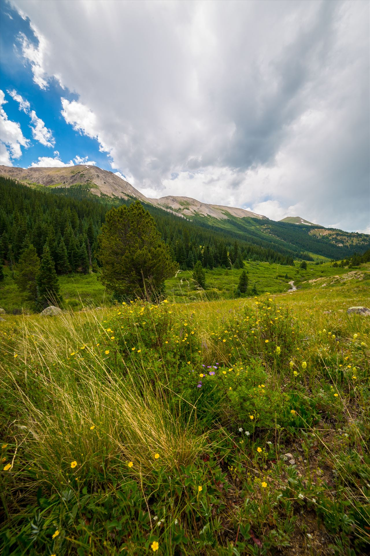 Independence Pass 03 -  by D Scott Smith