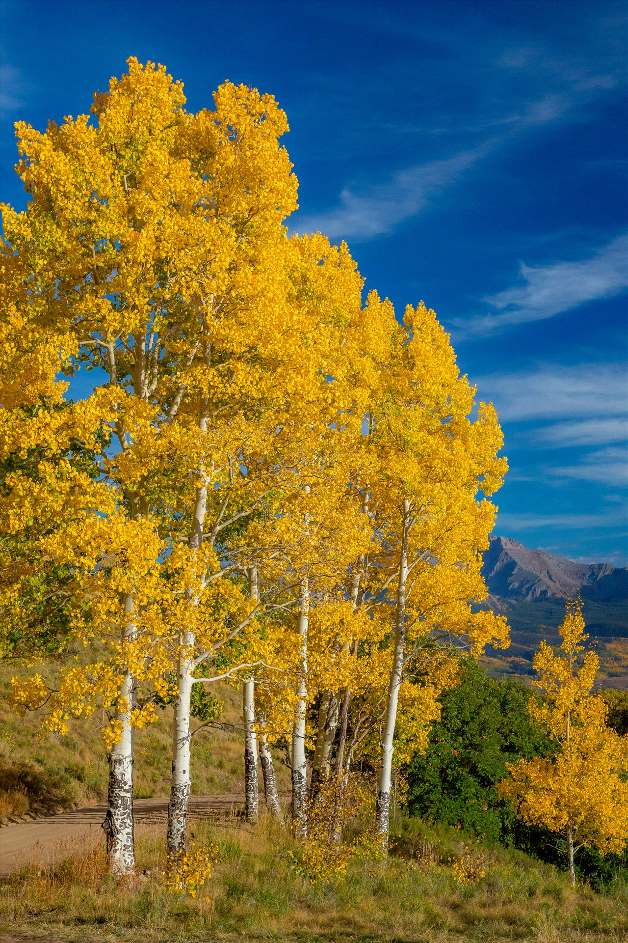 Silent Aspens - Aspens line a mountain pass on Last Dollar Road, Telluride. by D Scott Smith