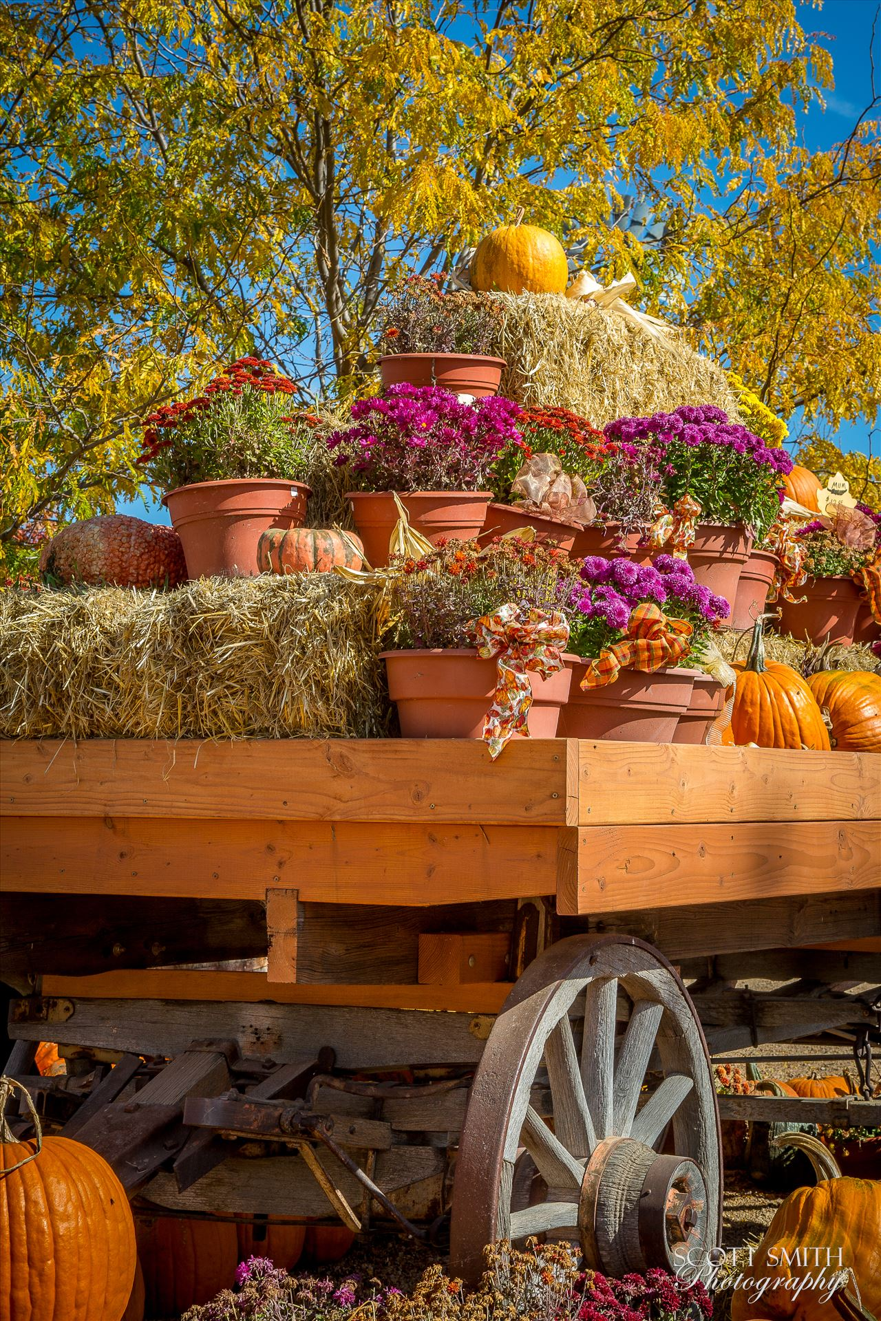 Bounty - A wagon full of fall flowers and pumpkins - from Anderson Farms, Erie Colorado. by D Scott Smith