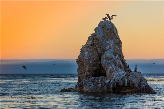 Pelican Rock by D Scott Smith