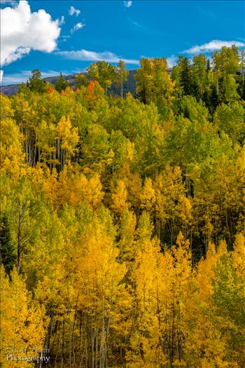 Snowmass Wilderness Area Fall Colors by D Scott Smith