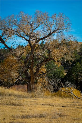 Country Tree No 1 by D Scott Smith
