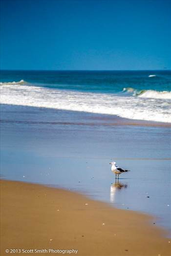 Gull on the Beach by D Scott Smith