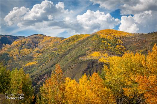 Snowmass Hillside No 4 by D Scott Smith