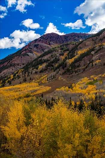 Fall in Aspen Snowmass Wilderness Area No 3 by D Scott Smith