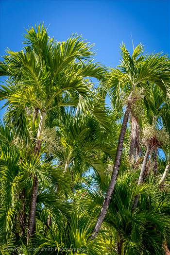 Palm Trees by D Scott Smith