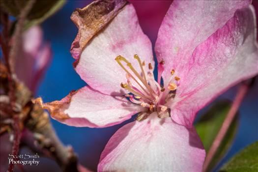 Spring Bloom -
