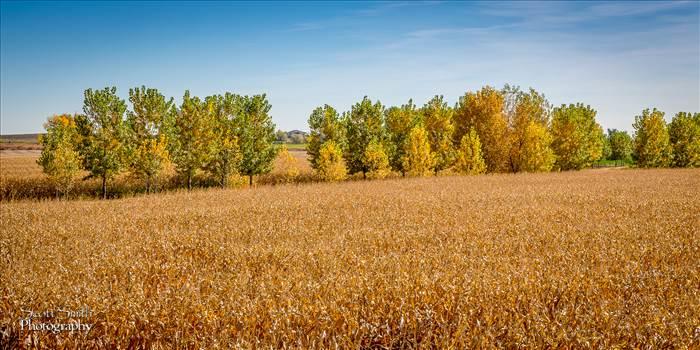 Field - Anderson Farms, Erie Colorado.