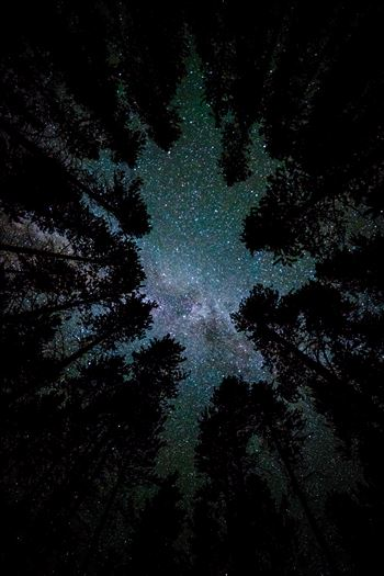 Camping with a View - A beautiful view of the milky way from our campsite at Turquoise Lake, Leadville Colorado.