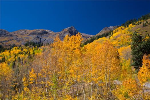 Million Dollar Highway - A quick shot of the aspens from the million dollar highway between Ourway and Silverton, Colorado.