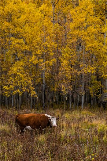 Fall Grazing by D Scott Smith