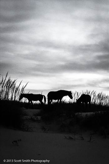 Wild Horses of Currituck No 2 by D Scott Smith