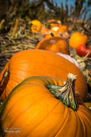 Anderson Farms Pumpkin Patch -