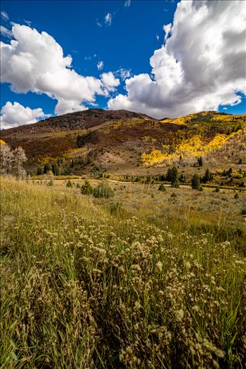 Fall in Aspen Snowmass Wilderness Area No 2 - Summer grasses give way to fall colors between Redstone and Marble, Colorado.