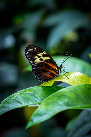 Resting Butterfly by D Scott Smith