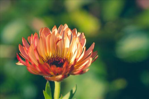Fall Flower -